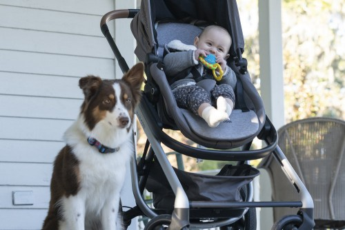 "COUNCIL OF DADS -- ""Tradition"" Episode 105 -- Pictured: (l-r) Cowboy (Dog), Baby Hope -- (Photo by:"